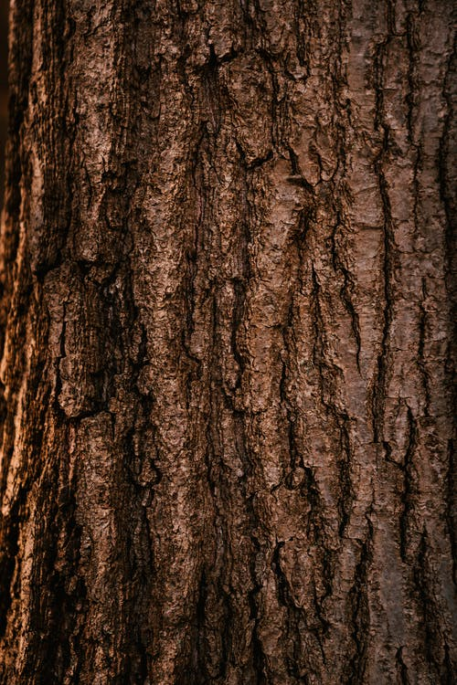 Textured bark of tree growing in forest in daytime