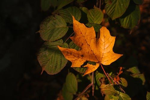 Autumn leaf on evergreen plant in dark forest