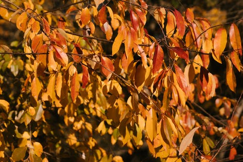 Brown and yellow leaves on thin fragile branches of tree growing in garden on sunny day
