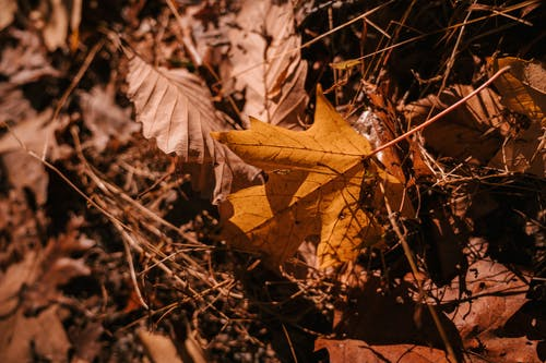 Dry fallen leaves and thin brushwood on ground in autumn forest