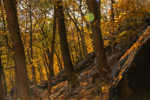 Picturesque scenery of tall trees with yellow leaves growing on rocky hill slope in peaceful forest on sunny autumn day