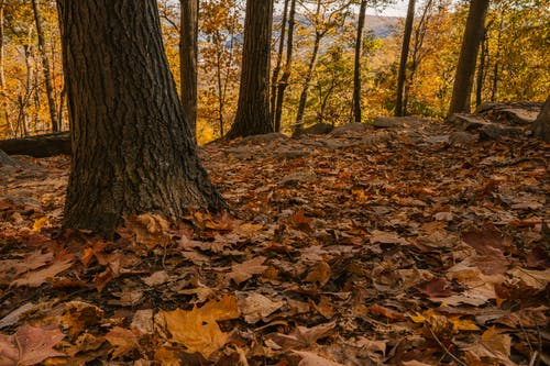 Picturesque view of autumn forest with fallen leaves and golden trees in sunlight