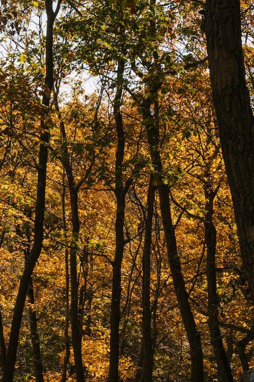 Tall lush trees in autumn park
