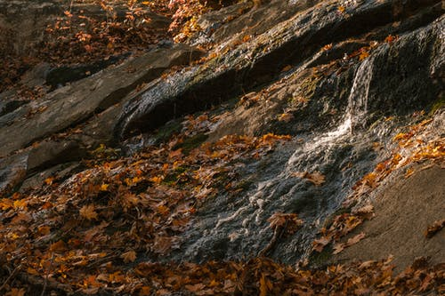Scenery view of waterfall with pure water fluid on rough rock with autumn leaves in daylight