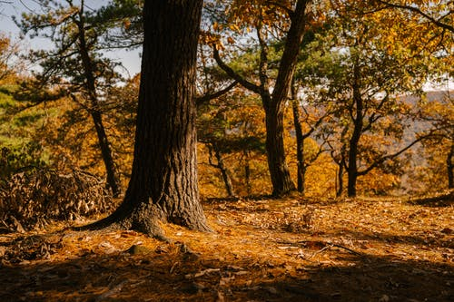 Scenic view of trees with dry ribbed trunks and bright foliage in autumn in sunlight
