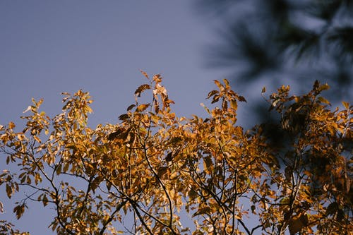 Bright tree branches with faded leaves in autumn park