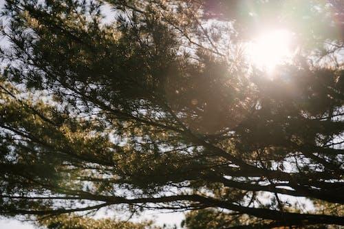 Árboles Verdes Crecidos En El Parque En La Luz Del Sol