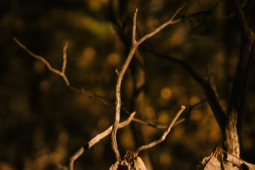 Dry wavy tree twig in autumn forest