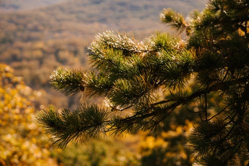 Picturesque view of evergreen tree branch with needles growing on mount in fall in sunlight