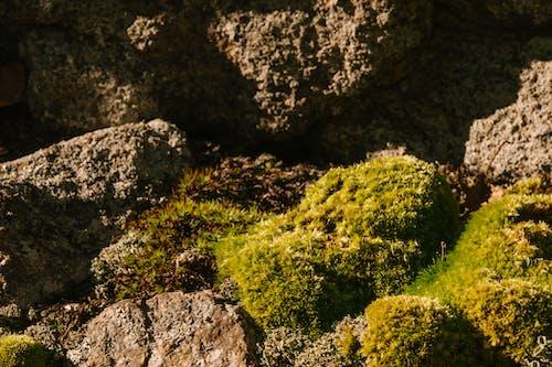Безкоштовне стокове фото на тему «барвистий, безтурботний, вегетувати»
