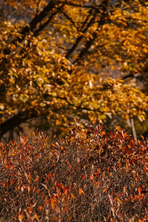 Albero Di Autunno E Piante Con Foglie Luminose Nel Parco