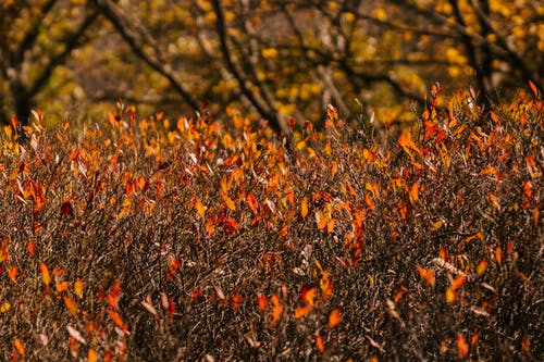 Picturesque view of plants with thin stems and colorful leaves growing near trees in garden in fall season