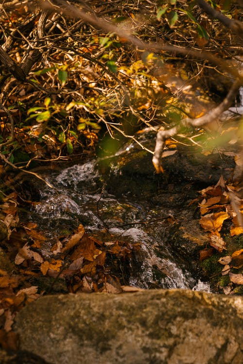 Fast waterfall on mount near autumn tree
