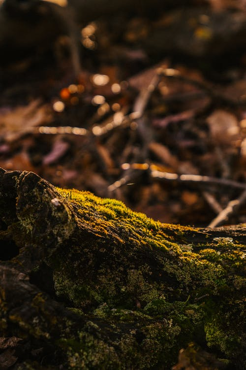 Fallen tree trunk with dry rough bark and green moss in woods in fall season