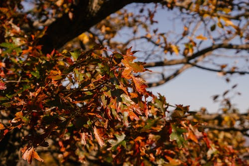 Low angle of wet golden foliage of tree growing in fall forest under bright sunlight