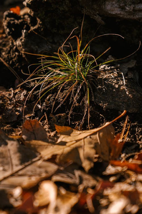Gratis lagerfoto af blad, botanik, delikat