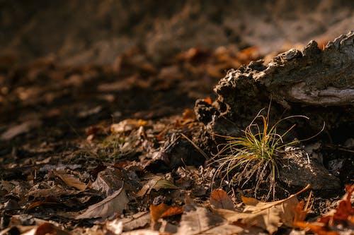 Zielony Kiełek Rośnie W Pobliżu Kamienia W Lesie Jesienią