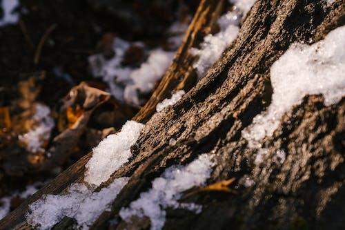 Baumstamm Unter Schnee Im Wald
