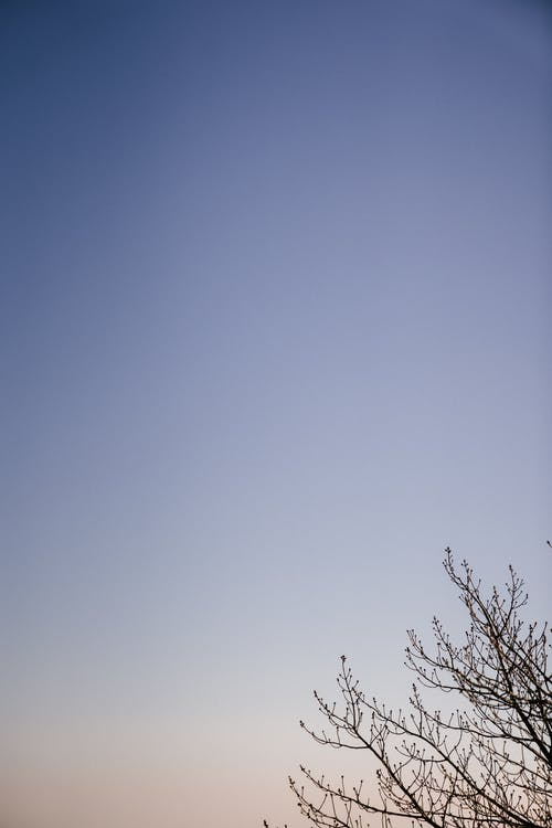 Leafless tree against clear blue sky