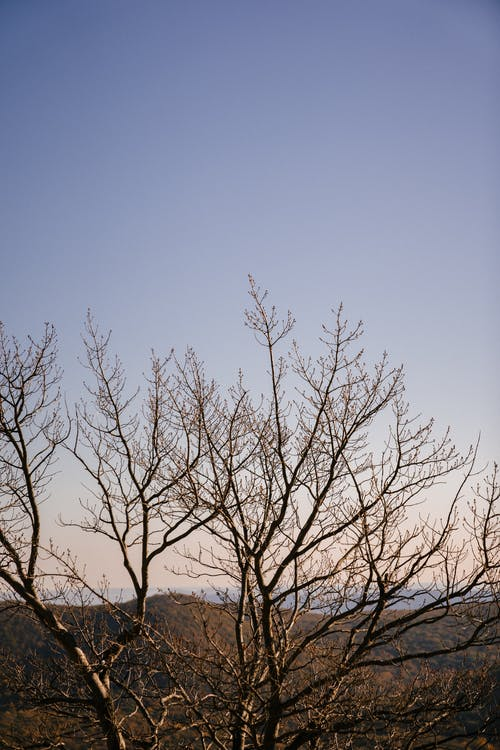 Leafless tree on hill in countryside