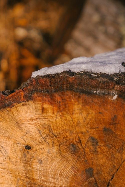 Trockener Baumstamm Unter Schnee In Der Landschaft