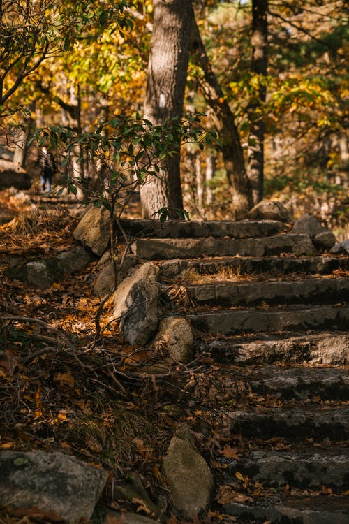 Old stone steps in fall park