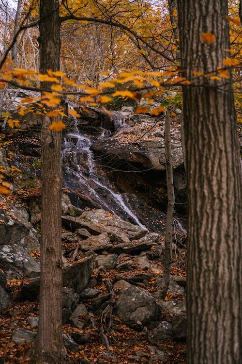 Narrow creek on rocky boulders in forest