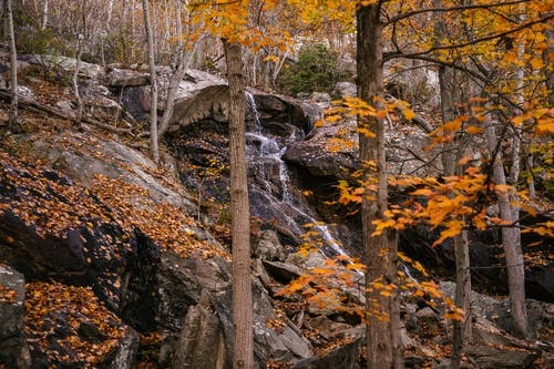 Rapid river flowing through stony cliff in autumn forest