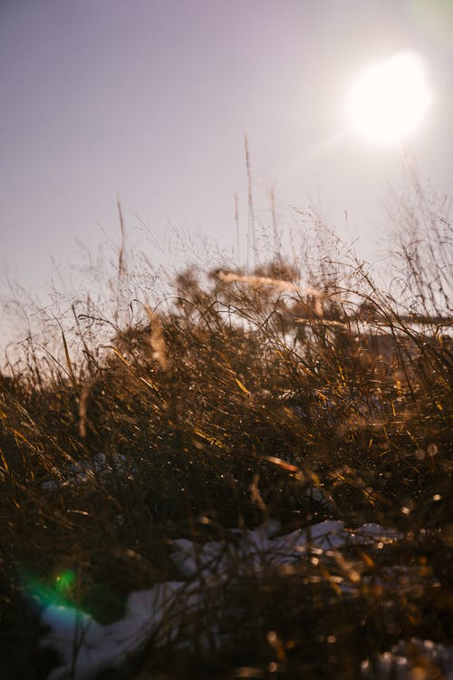 Dry meadow grass covered with snow under bright sunshine
