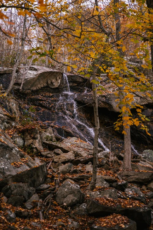 Picturesque landscape of fast stream falling from rocky cliff among tall tree trunks with yellow foliage