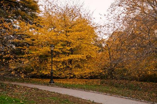 Empty walkway in autumn park in daylight