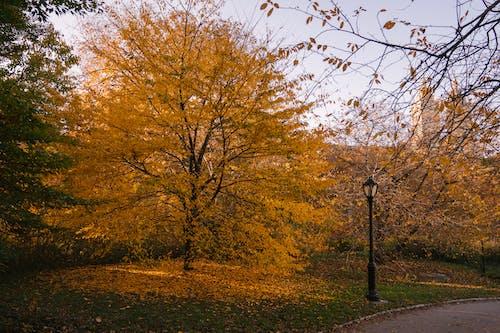 Empty alley in autumn park in daylight