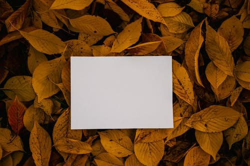 Empty paper sheet placed on autumn foliage