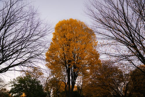 From below of tall aged tree with yellow foliage growing in forest in autumn time in daylight