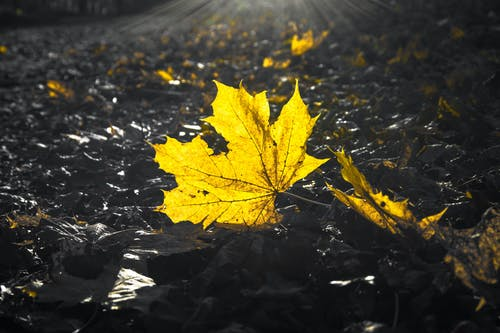 Free stock photo of against the light, autumn, contrast