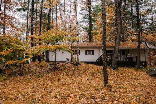 Одинокий дом в осеннем лесу