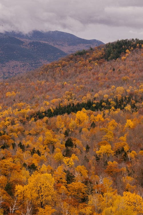 Autumn yellow forest under cloudy sky