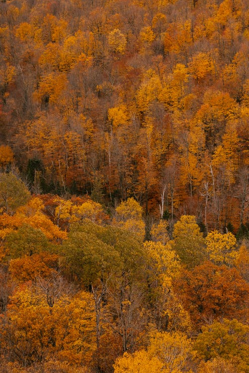 View of beautiful fall forest