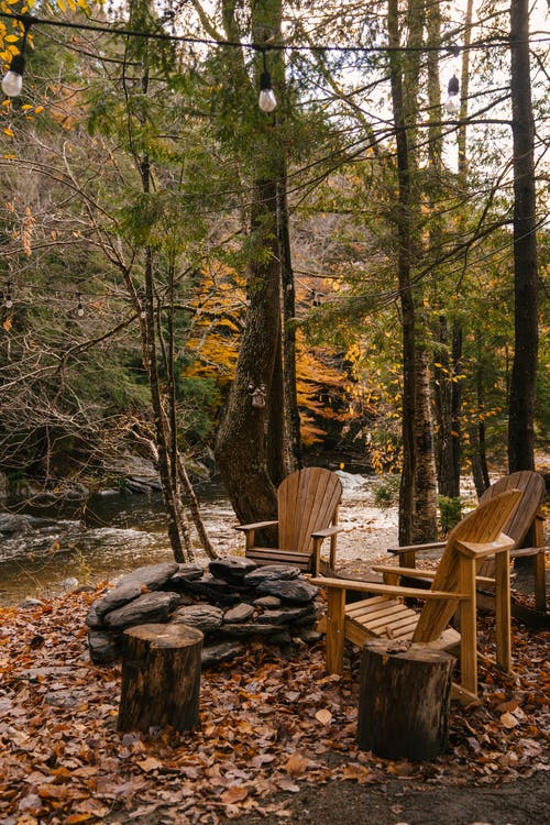 Wooden chairs in coniferous forest