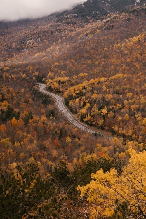 Aerial view of picturesque scenery of asphalt road going between trees with golden leaves in autumn forest