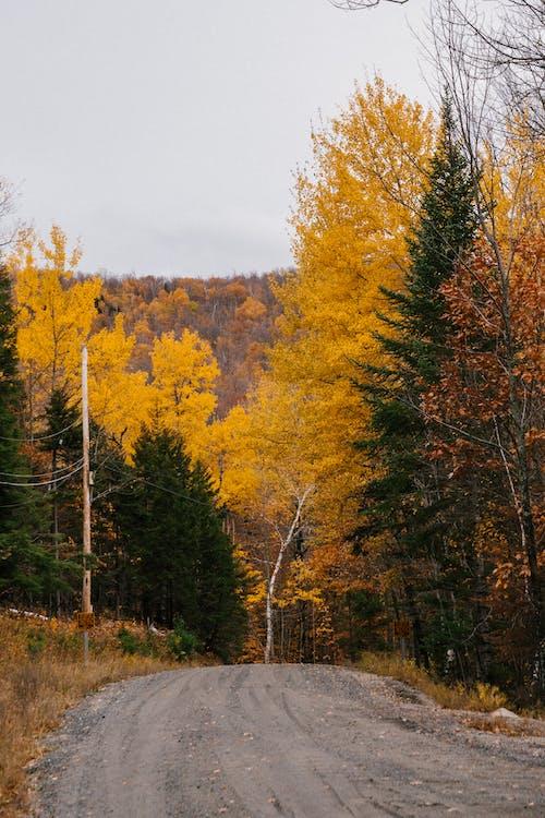 Empty road between trees in autumn