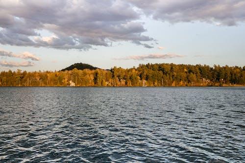 Plätschernde Wasseroberfläche Nahe Wald