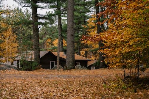 Домик в осеннем лесу