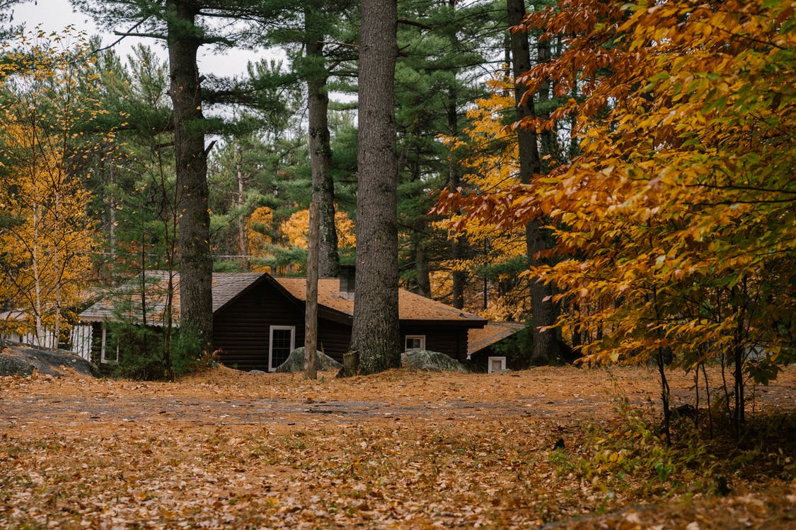 Small wooden hut located in fall forest with evergreen coniferous trees and trees with golden leaves