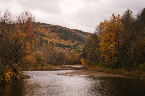 River flowing between autumn trees