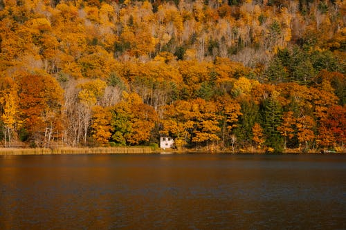Picturesque view of calm lake near trees with golden yellow foliage and evergreen coniferous trees in fall woods
