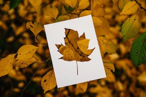 Stencil of leaf against foliage