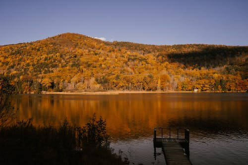 Picturesque scenery of calm lake near forest with evergreen coniferous trees and trees with golden leaves in mountainous area