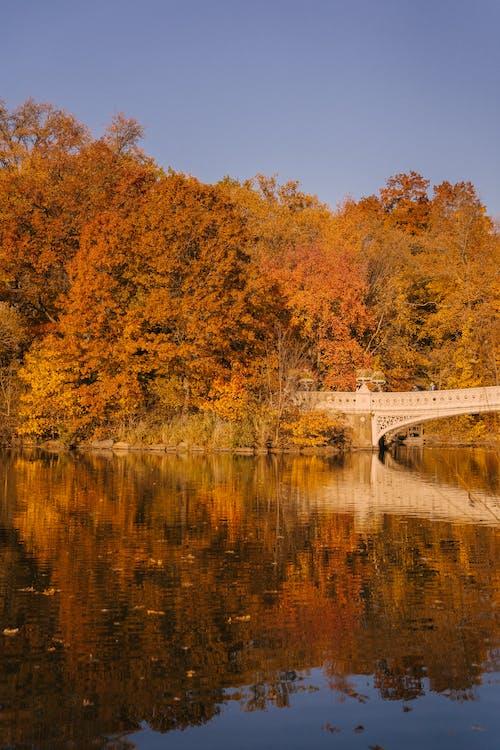 Bridge over river near forest