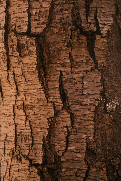 Dark textured dry bark of tree trunk with cracks and rough surface in forest